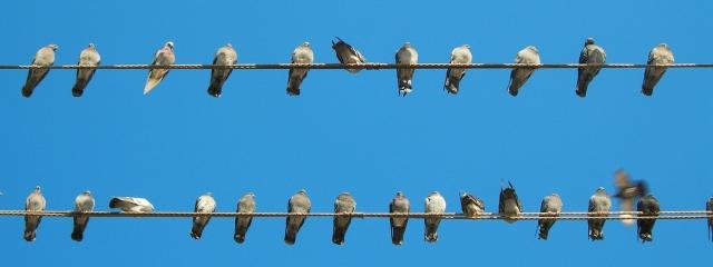foto ocells