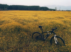 montainbike-918426